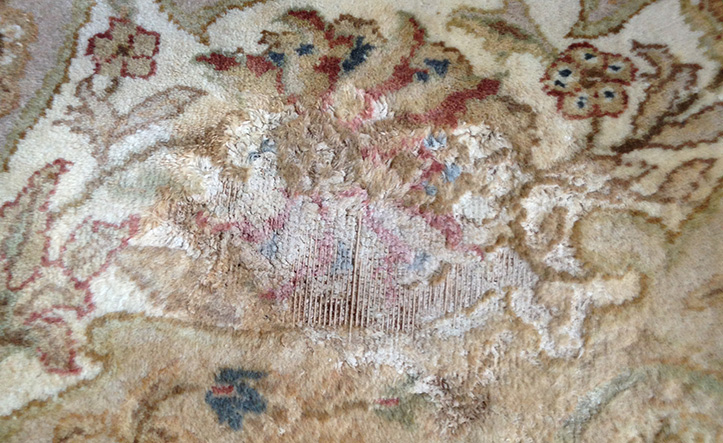 Rug Without Moth-Proofing